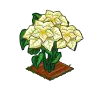 Perfect White Poinsettia-icon