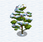 Durian Tree snow