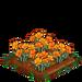 Golden Poppy 100