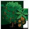 Walnut Tree-icon