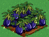 Eggplant extra100.png
