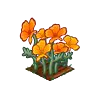 Perfect Golden Poppies-icon