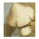 Clamshell Mushroom