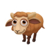 Baby Portland Sheep