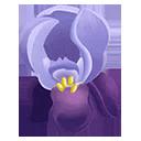 Crimean Iris