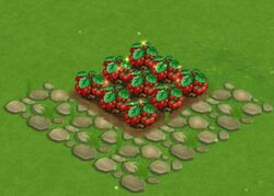 Samplestrawberry