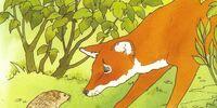 Stout Fox