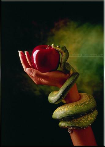 File:Fruitofthepoisonoustree1.05.jpg