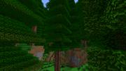 Redwoodtrees