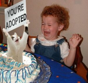 Youre adopted cat