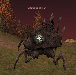 Brooder2
