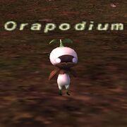 Orapodium