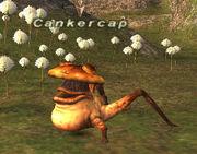 Cankercap