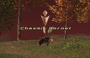 Chasmic Hornet