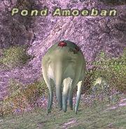 Pond Amoeban