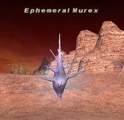Ephemeral Murex