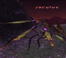 Jaculus