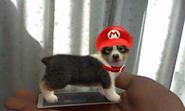NintendogsCats AR Mario