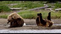 Disneynature-bears-3
