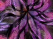 FFXII Black Hole