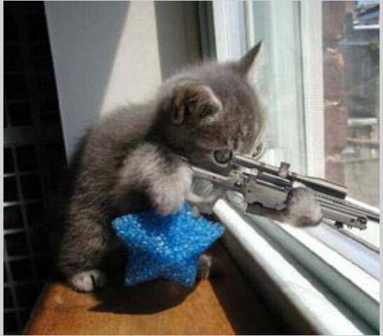 File:Sharpshooter kitty.jpg