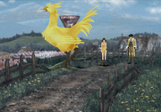 Winhill mother chocobo
