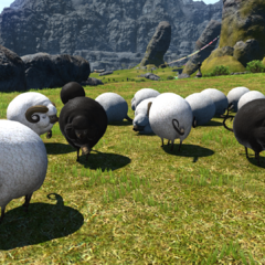 Sheep in the <a href=