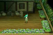 Sylph home entrance ios