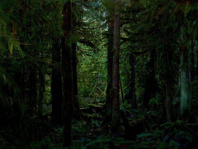 File:Pinelands.jpg