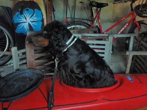 File:Kayak Dog.JPG
