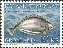 19471 reinhardtius-hippoglossoides