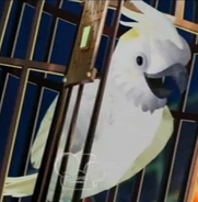 BirdHalloween