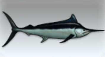 File:Black Marlin.jpg