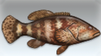 File:Grouper.jpg