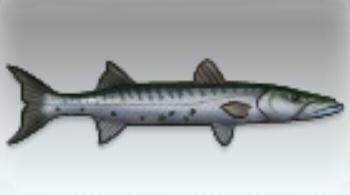 File:Barracuda.jpg
