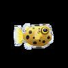 Box Fish (1)