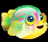 Broadbarred Goby (baby)