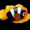 Clarkii Clownfish (1)
