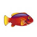 Flame Hawkfish (1).png