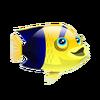 Bicolor Angelfish (2)
