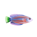Six Line Wrasse (1).png