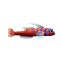 Catalina Goby (1).png