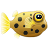 Yellow Boxfish (1)