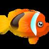 Fire Clownfish (1)