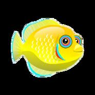Lemonpeel Damsel (baby)