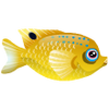Longfin Damsel (1)