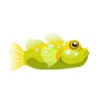 Watchman Goby (1)