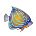 Annularis Angelfish (1).png