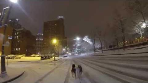 Pittsburgh Dog Sledding