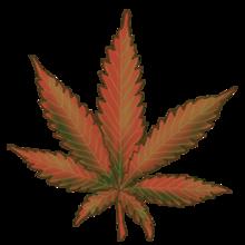 Cannabis Bubba Kush